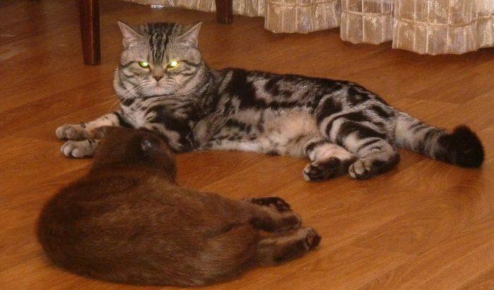 Как происходит вязка котов и кошек