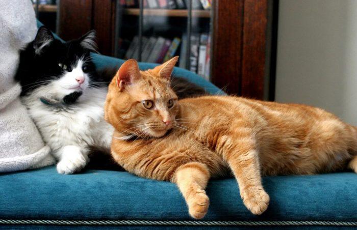 Объясняем как просто определить пол котенка